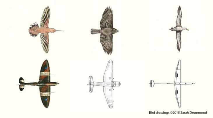 bird and aircraft wings