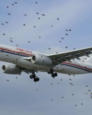 Do Airplanes Avoid Birds? – Can Birds Bring Down A Plane?